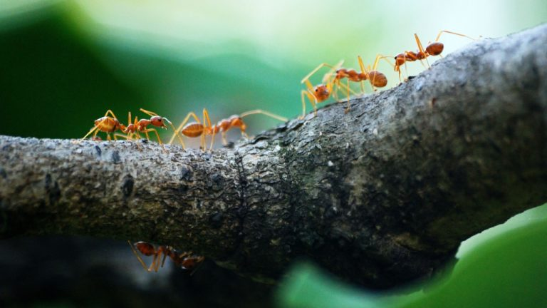 Ant Colony Optimisation Algorithm